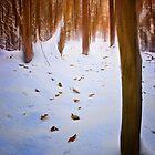 The Woodland Path - Congburn, Durham. UK by David Lewins
