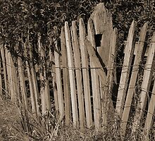Old Fence by vilaro Images