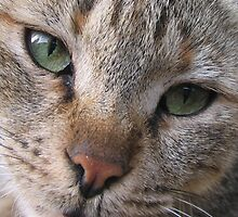 The cat's eye by damghani