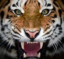 Roar by Alain Turgeon