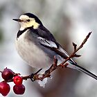 Winter Wagtail by Krys Bailey