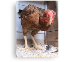 Fowl Looks Canvas Print