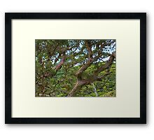 """Limbs"" Framed Print"