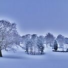 Frozen At Day Break ~ Peel Park ~ by Sandra Cockayne