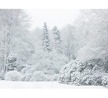 All is white... Photographic Print