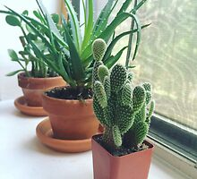 Succulents and Cactus by Lagoldberg28