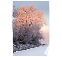 Winter Dawn Light Poster