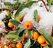 The thaw begins.. by buttonpresser