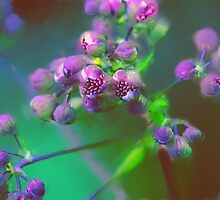 The Purple Power Of Spring by AndreaFettweis
