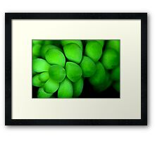 Green in Nature Framed Print