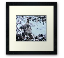 Buffy female turkey Framed Print