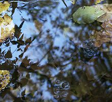 Leaves on Gunpowder Creek by Valarie Napawanetz