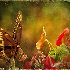 Swallowtail Revisited by DottieDees