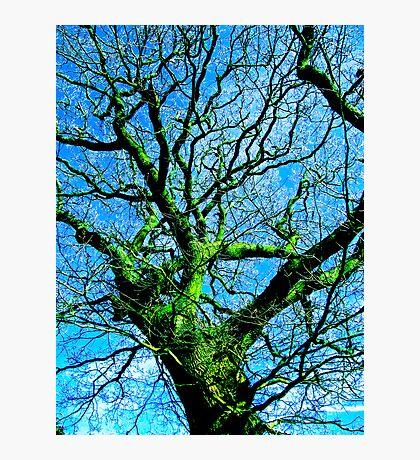 Old Man Moss Photographic Print