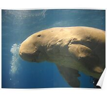 Unbelievable Dugong Poster