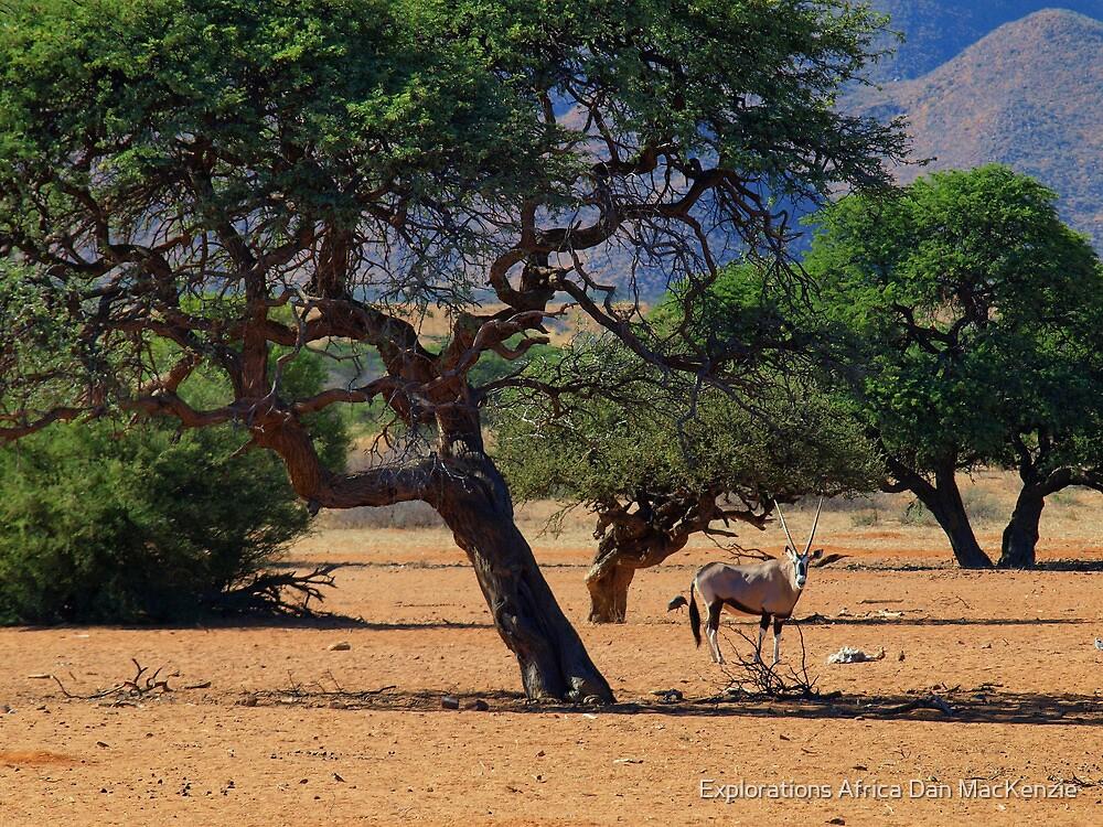 Desert Denizen by Explorations Africa Dan MacKenzie