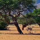 Desert Denizen by Dan MacKenzie