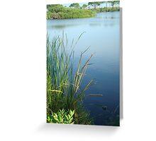Wetlands- Panama City Beach, Fl Greeting Card