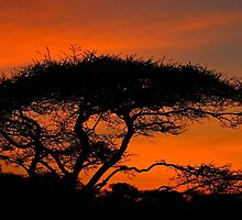 Serengeti Sunrise by Owed To Nature