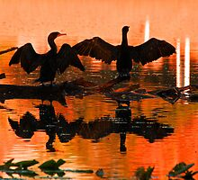Silhouetted cormorants in a florida sunset by jozi1