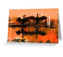 Silhouetted cormorants in a florida sunset Greeting Card