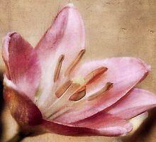 Pink Textures by Jarede Schmetterer