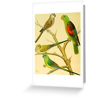 1878 naturalist image of Australian parakeets Greeting Card