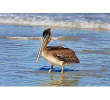 Pelican Wade Photographic Print