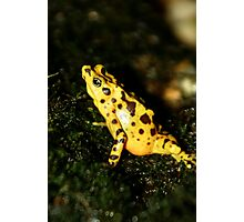 Panamanian Frog at Lowry Park Zoo Photographic Print
