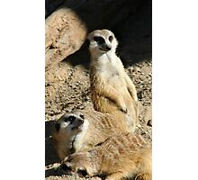 Meekats at Lowry Park Zoo Photographic Print