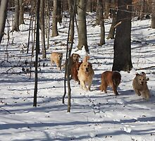 Snowy Woodlands Race -10 by goldnzrule