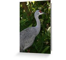 Sandhill Crane at Lowry Park Zoo Greeting Card