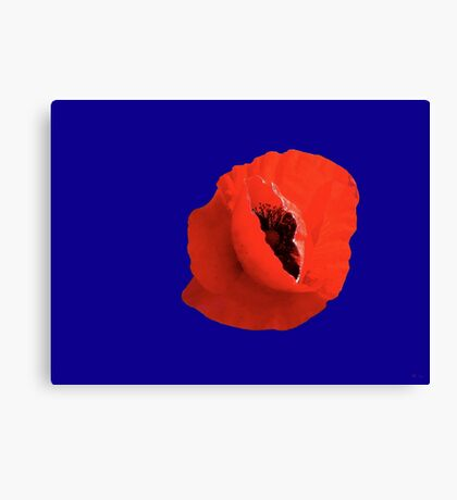 Poppy On Blue Canvas Print