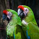 Parrots by Diego Re