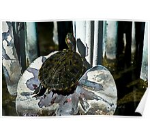Turtle On Art Poster