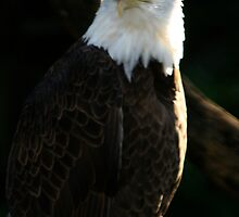 Majestic Freedom III  by Sheryl Unwin