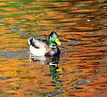 Duck in Fall Reflection 1 by MichelleRhea