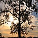 Lake Manawa Tree by MaryLynn