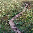 A Pretty Little Pathway by Amanda McConnell