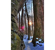 Rock Tree smash SUN Photographic Print