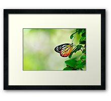Smells flower a day: On Explore Featured: On 3 Featured works Framed Print