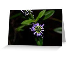 Purple starlet Greeting Card