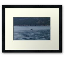 The Final Whale of Summer Framed Print