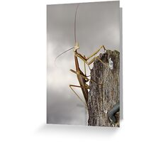 Pray tell Greeting Card