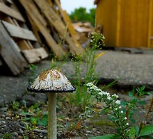 Urban Fungus by nituathaill