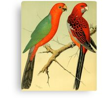 Colorful Birds of the Amazon: 1878 naturalist illustration Canvas Print