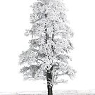 Lone Pine # 12 by Rodney55