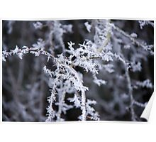 Frosty Branches Poster
