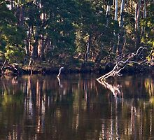 Huon River Reflections by jayneeldred