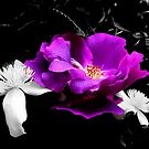 ARose between two.....clematis by Elaine Game